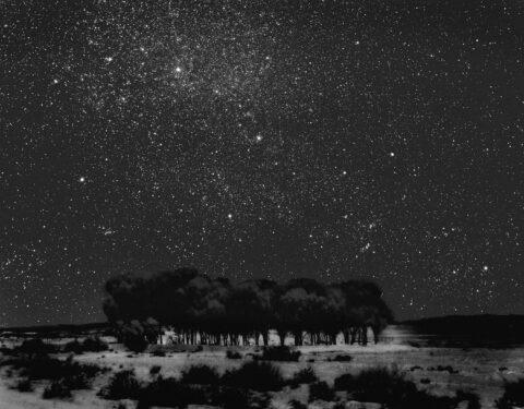 Starry Grove