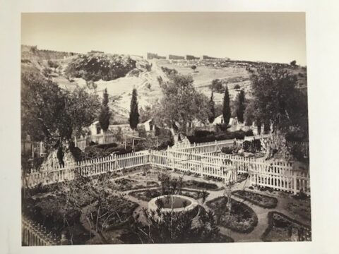 Garden of Gethsemane, near Jerusalem