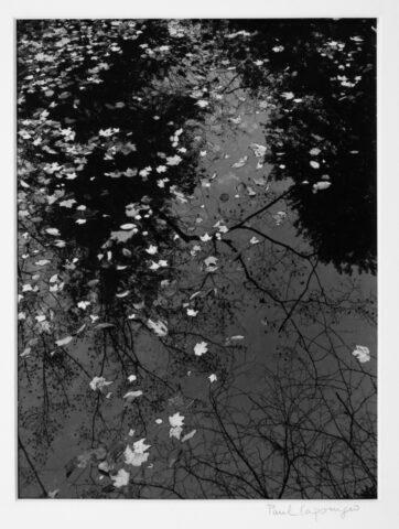 Pool & Leaves 1968