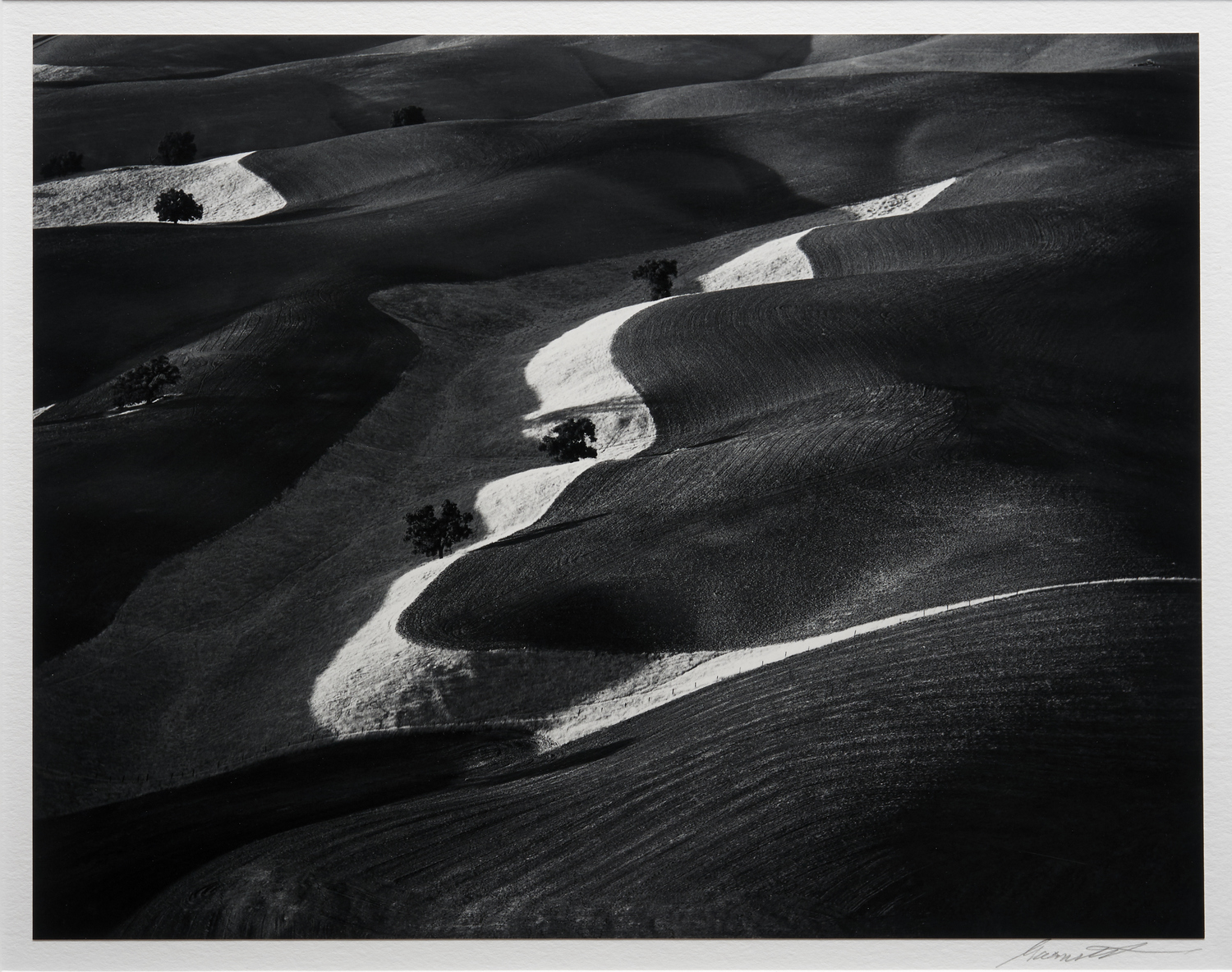 Eight Trees on Plowed Hills, Paso Robles, CA