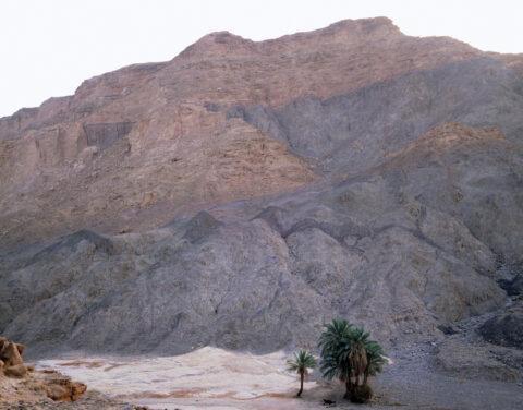 Oasis at Bir-Biriya, Sinai