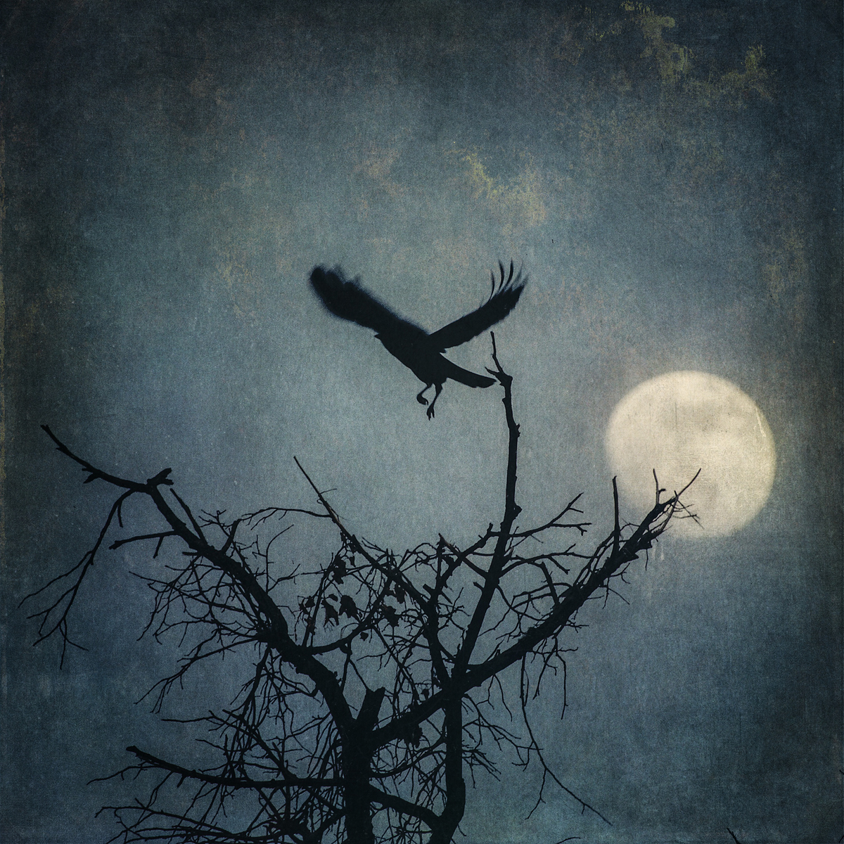 The Cry of the Lonely Crow